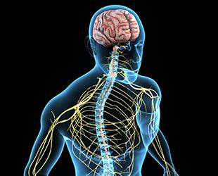 https://pedderhealth.com/sc/wp-content/uploads/sites/3/home-service-neurosurgery.jpg